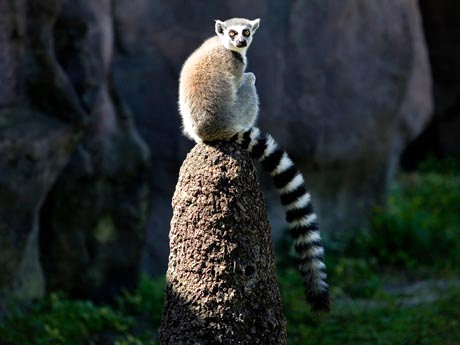 Busch Gardens Has Teamed Up With The Cast of Madagascar