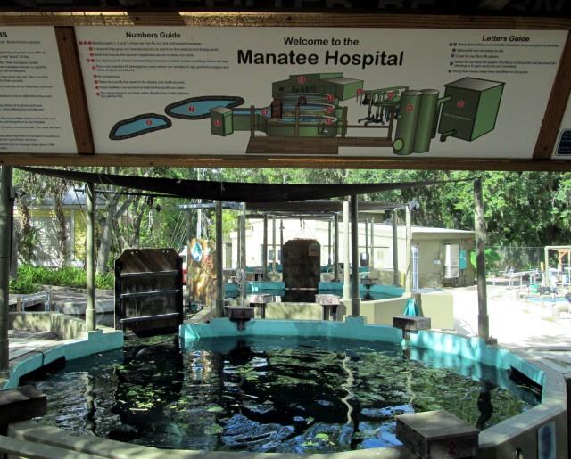 Hail To Florida's Manatee Rehab Hospitals
