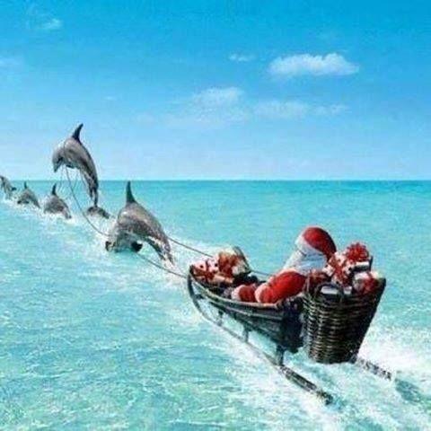 floridatraveler santa and dolphin sled