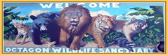 floridatravelr octagon-wildlife-punta-