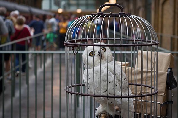 UNIVERSAL white owl