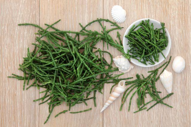 floridatraveler sea asparagus