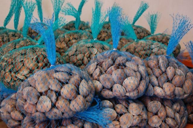 FLORIDATRAVELER clams at Southern Cross Cedar Key