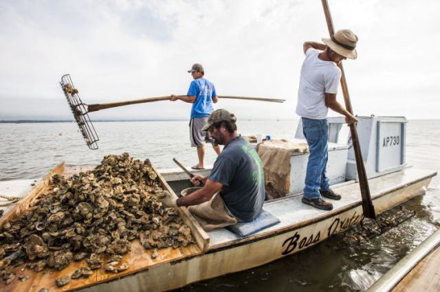 FLORIDATRAVELER oystering apalachicola