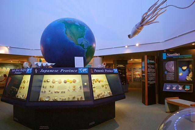floridatraveler-shell-museum