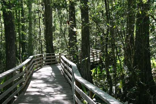 00floridatraveler-corkscrew-swamp-sanctuary