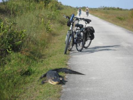 floridatraveler-biker-and-gator2