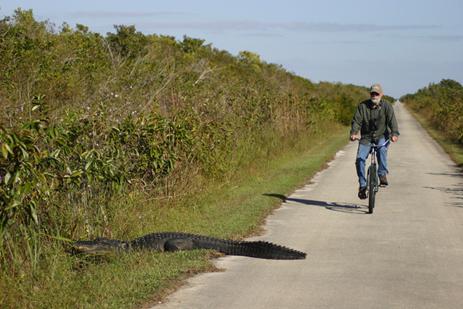 floridatraveler-biker-and-gators