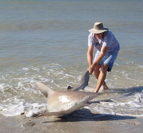 FLORIDATRAVELER shark and man