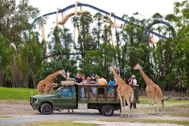 FLORIDATRAVELER giraffe-feeding-on-Busch-Garden-Tampa