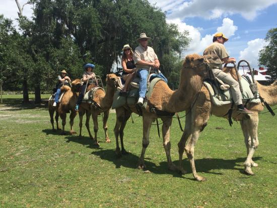 floridatraveler giraffe ranch safari-by-camel