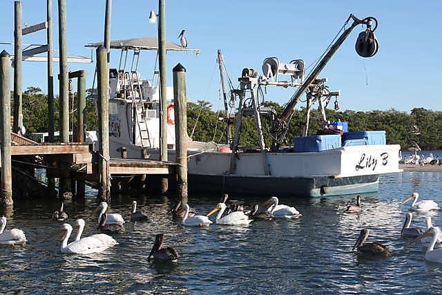 FLORIDATRAVELER cortez-seagulls