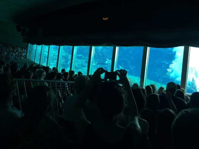 floridatraveler mermaid show