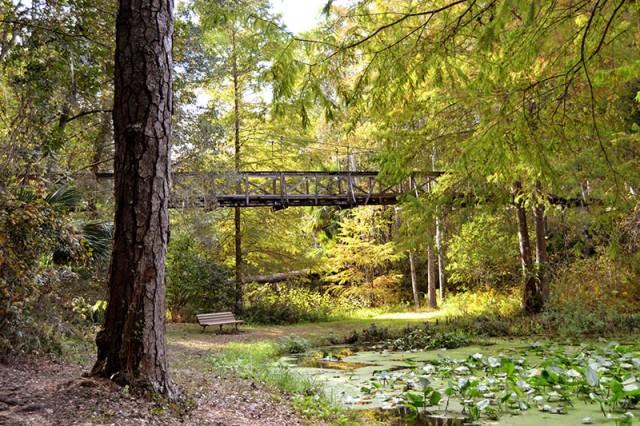 Suspension Bridge at Ravine Gardens, Palatka