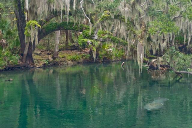FLORIDATRAVELER Blue-Spring-State-Park
