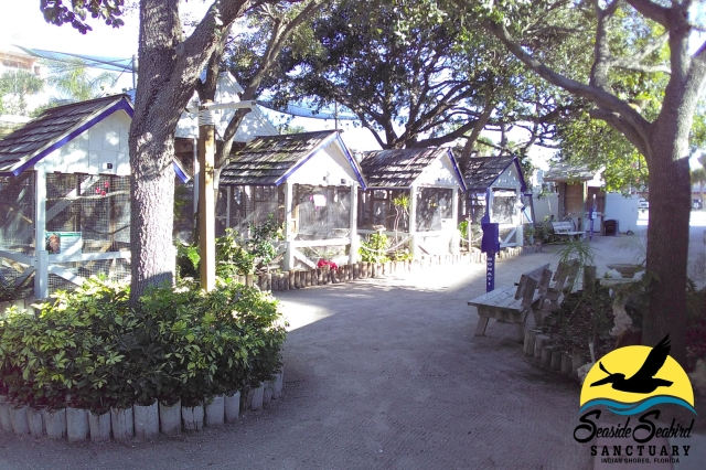 floridatraveler seabird sanctuary