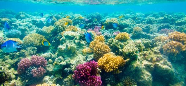 FLORIDATRAVELER SNORKEL key west snorkel-reef-cruise4